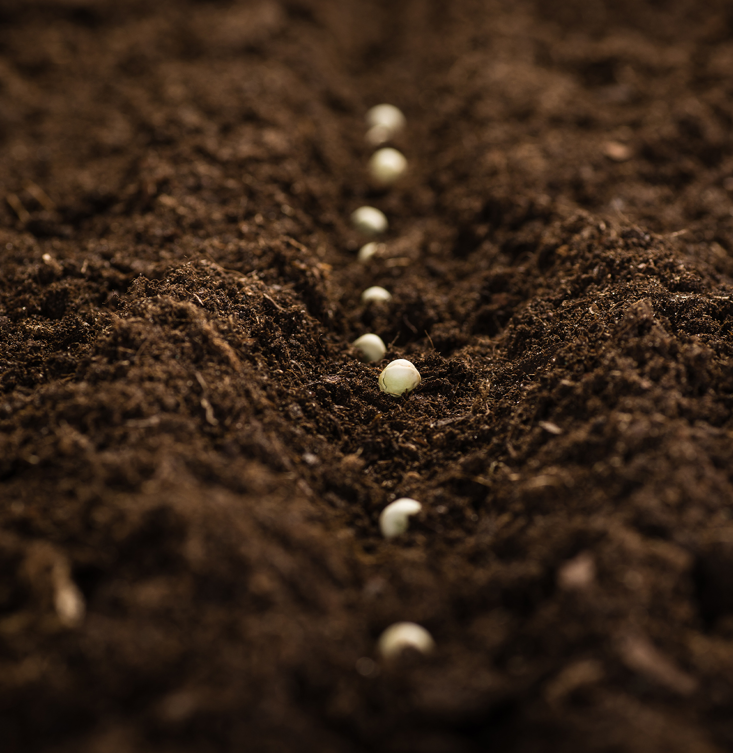 Picture of seeds in ground