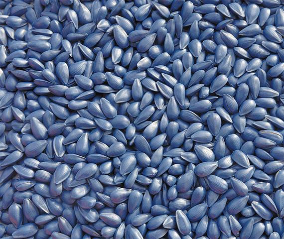 seed-coating